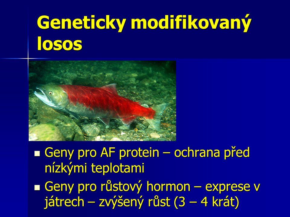 Geneticky modifikovaný losos Geny pro AF protein – ochrana před nízkými teplotami Geny pro AF protein – ochrana před nízkými teplotami Geny pro růstov