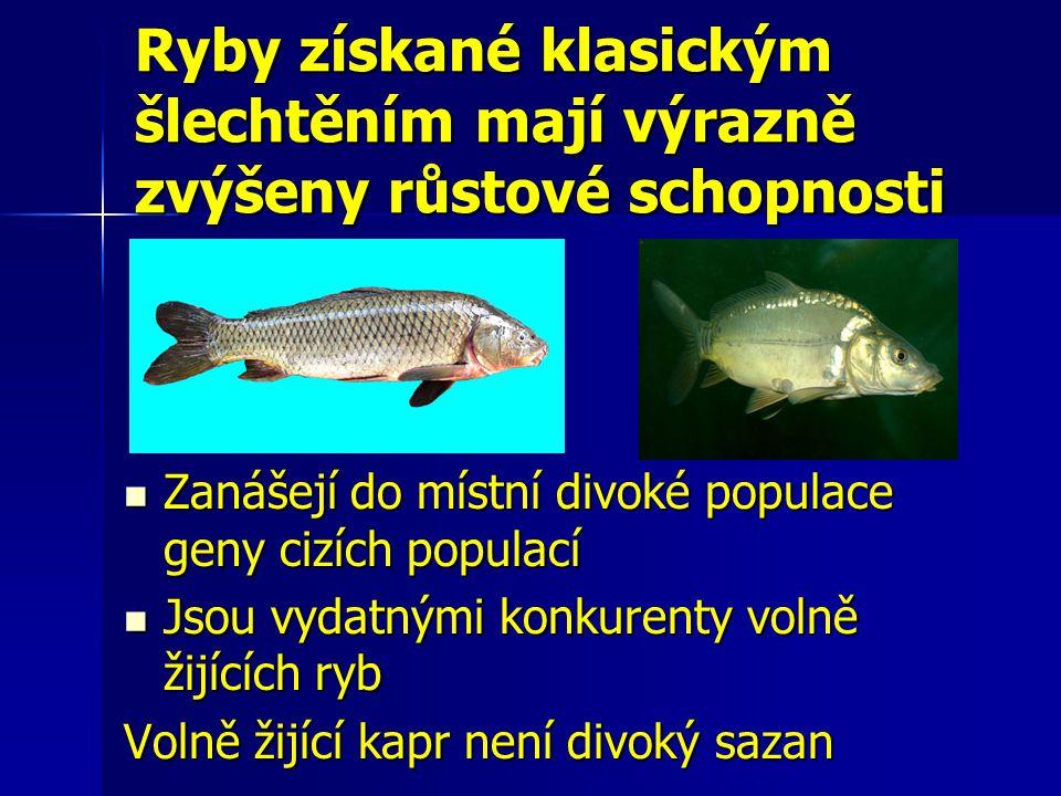 Ryby získané klasickým šlechtěním mají výrazně zvýšeny růstové schopnosti Zanášejí do místní divoké populace geny cizích populací Zanášejí do místní d