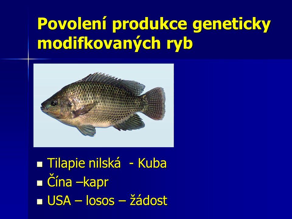 Povolení produkce geneticky modifkovaných ryb Tilapie nilská - Kuba Tilapie nilská - Kuba Čína –kapr Čína –kapr USA – losos – žádost USA – losos – žád