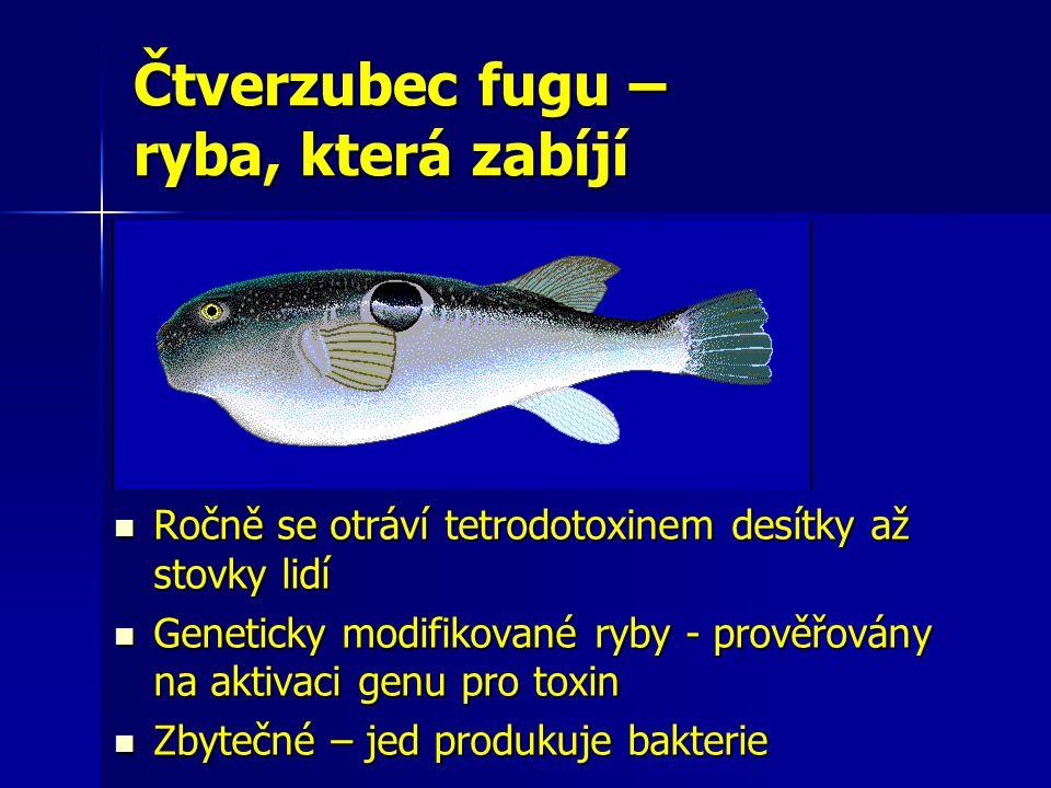Čtverzubec fugu – ryba, která zabíjí Ročně se otráví tetrodotoxinem desítky až stovky lidí Ročně se otráví tetrodotoxinem desítky až stovky lidí Genet