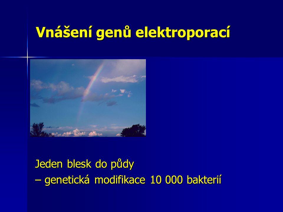 Vnášení genů elektroporací Jeden blesk do půdy – genetická modifikace 10 000 bakterií