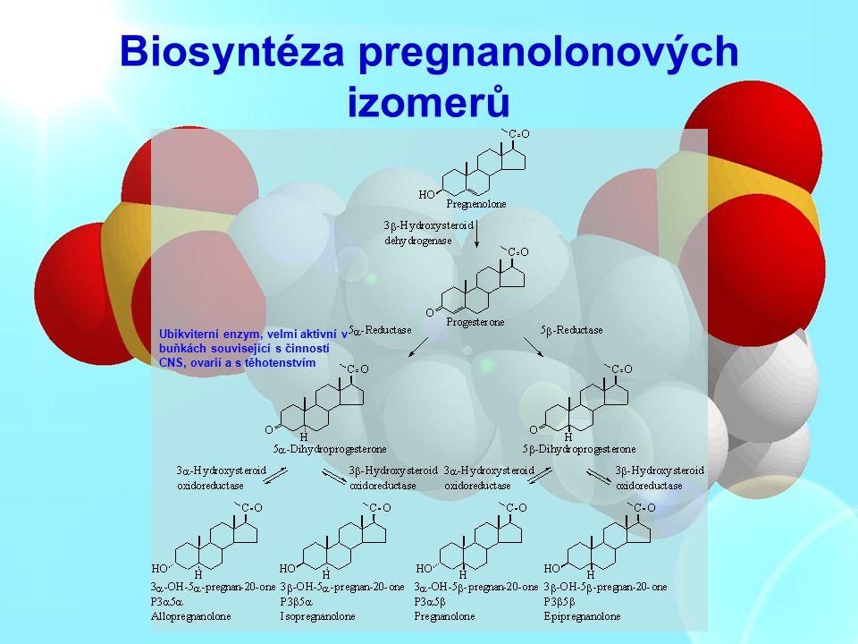 Biosyntéza pregnanolonových izomerů Ubikviterní enzym, velmi aktivní v buňkách související s činností CNS, ovarií a s těhotenstvím