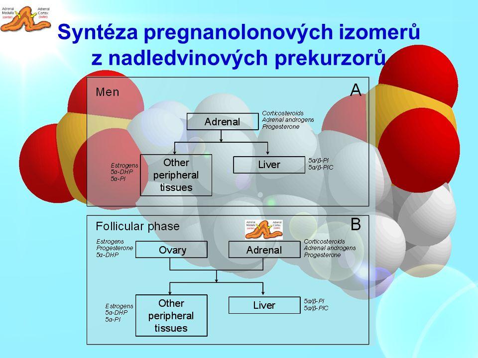 Syntéza pregnanolonových izomerů z nadledvinových prekurzorů