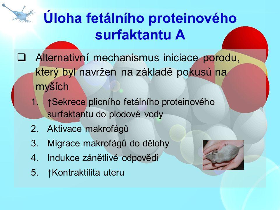 Úloha fetálního proteinového surfaktantu A  Alternativní mechanismus iniciace porodu, který byl navržen na základě pokusů na myších 1.↑Sekrece plicní