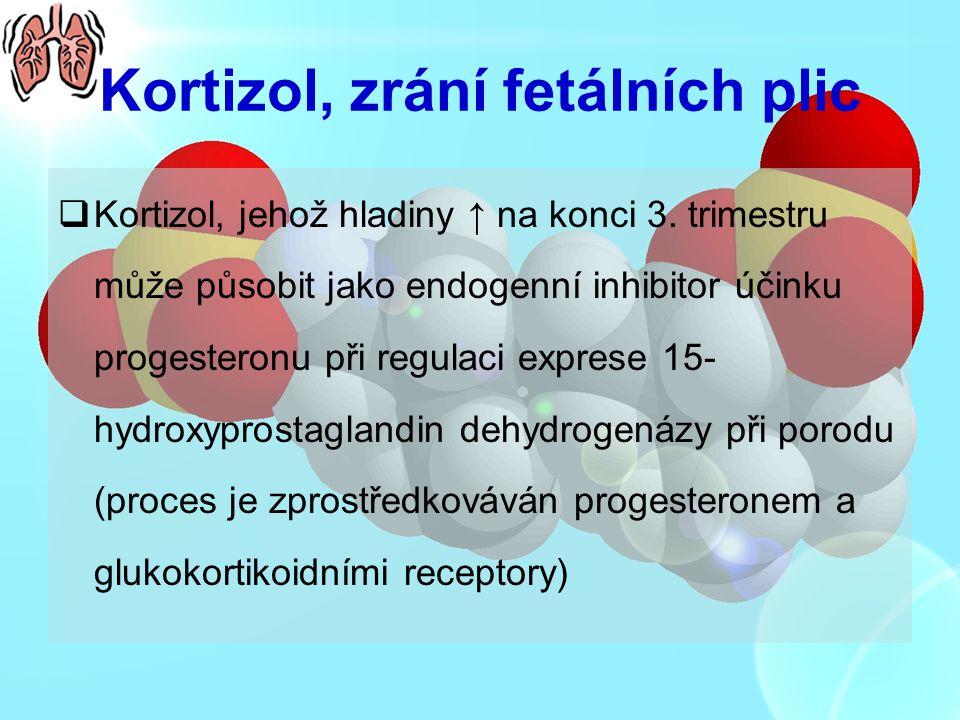 Kortizol, zrání fetálních plic  Kortizol, jehož hladiny ↑ na konci 3. trimestru může působit jako endogenní inhibitor účinku progesteronu při regulac