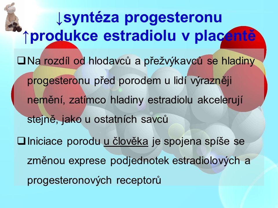 ↓syntéza progesteronu ↑produkce estradiolu v placentě  Na rozdíl od hlodavců a přežvýkavců se hladiny progesteronu před porodem u lidí výrazněji nemě