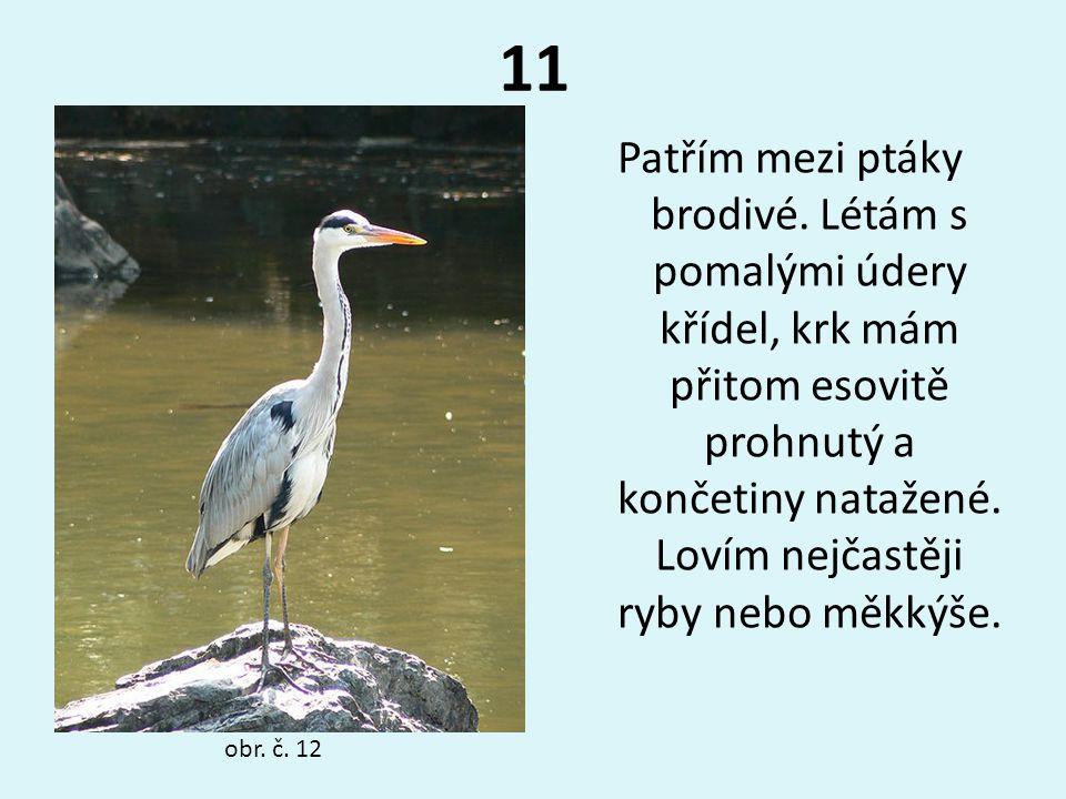 11 Patřím mezi ptáky brodivé. Létám s pomalými údery křídel, krk mám přitom esovitě prohnutý a končetiny natažené. Lovím nejčastěji ryby nebo měkkýše.
