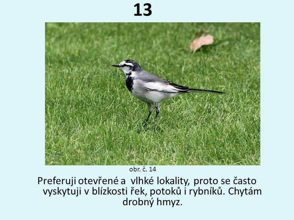 13 Preferuji otevřené a vlhké lokality, proto se často vyskytuji v blízkosti řek, potoků i rybníků. Chytám drobný hmyz. obr. č. 14