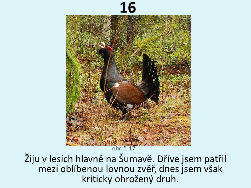 16 Žiju v lesích hlavně na Šumavě. Dříve jsem patřil mezi oblíbenou lovnou zvěř, dnes jsem však kriticky ohrožený druh. obr. č. 17