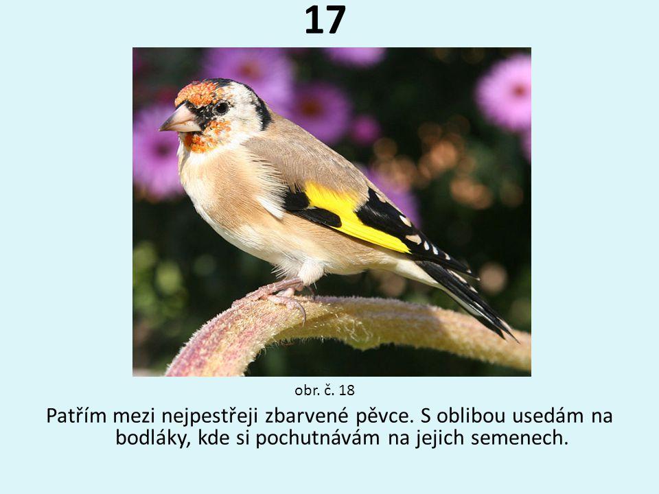 17 Patřím mezi nejpestřeji zbarvené pěvce. S oblibou usedám na bodláky, kde si pochutnávám na jejich semenech. obr. č. 18