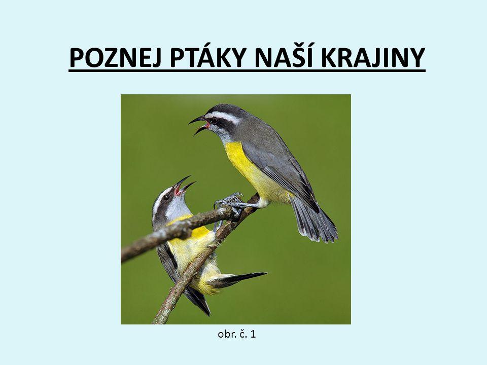 11 Patřím mezi ptáky brodivé.