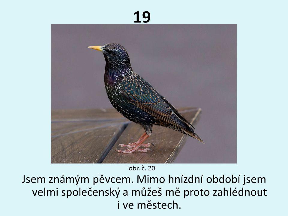 19 Jsem známým pěvcem. Mimo hnízdní období jsem velmi společenský a můžeš mě proto zahlédnout i ve městech. obr. č. 20