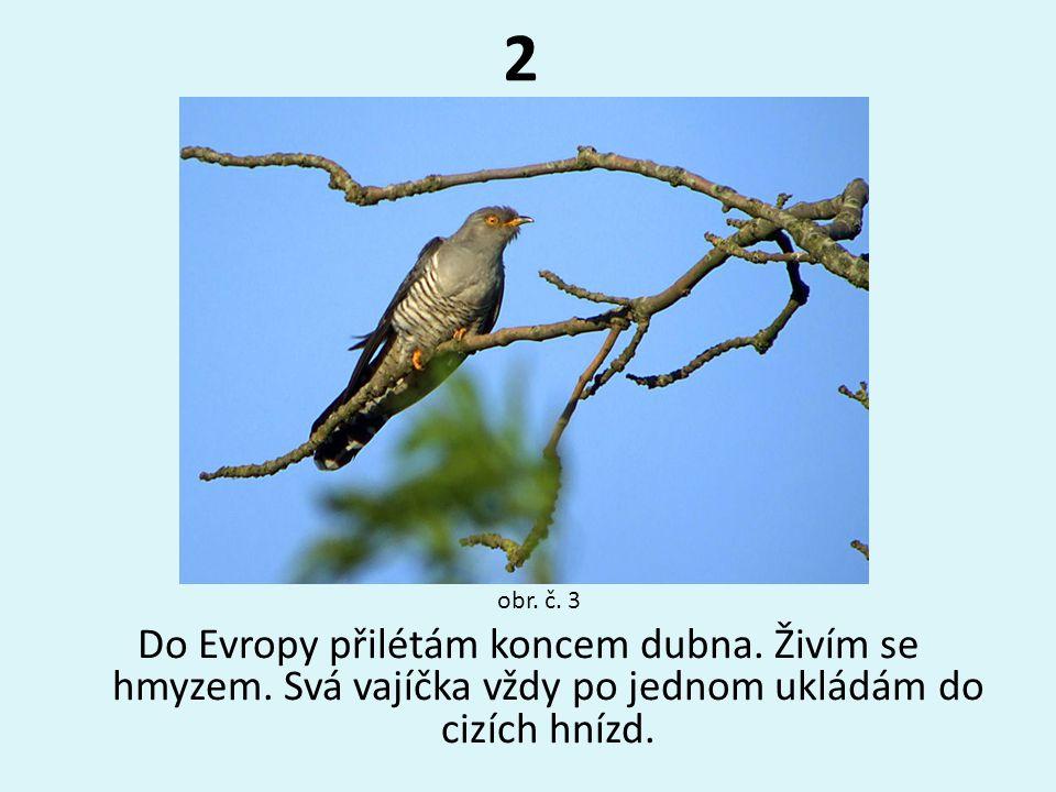 3 Hnízdím v dutinách stromů.Vyhledávám spíše otevřenou krajinu.