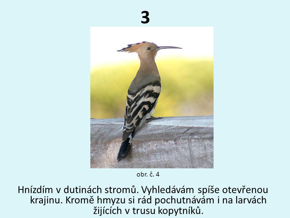 3 Hnízdím v dutinách stromů. Vyhledávám spíše otevřenou krajinu. Kromě hmyzu si rád pochutnávám i na larvách žijících v trusu kopytníků. obr. č. 4