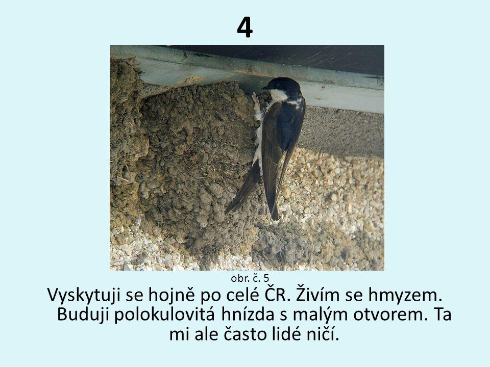 4 Vyskytuji se hojně po celé ČR. Živím se hmyzem. Buduji polokulovitá hnízda s malým otvorem. Ta mi ale často lidé ničí. obr. č. 5
