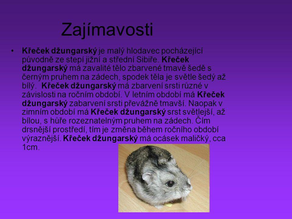 Zajímavosti Křeček džungarský je malý hlodavec pocházející původně ze stepí jižní a střední Sibiře. Křeček džungarský má zavalité tělo zbarvené tmavě