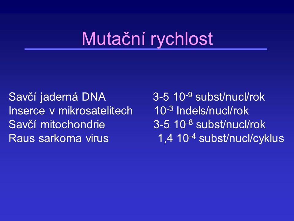 Rozdíly v mutačních rychlostech v závislosti na typu mutace Velké rozdíly existují ve frekvenci transicí a transversí Savčí jaderné geny: transice 60-70 % všech substitucí (teoreticky 33 %) V savčích mitochondriích 43 % Některé nukleotidy mutují častěji než jiné (např.
