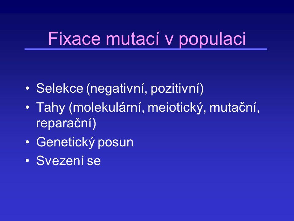 Vliv selekce na genofond druhu a populace Rychlá fixace některých mutací (pozitivní selekce) Genetické svezení se (hitchhiking) Geny angažované v imunitě nebo v sexualitě Eliminace většiny nových mutací v kódujících oblastech (negativní selekce) Konzervativní geny (možno odhadnout z poměru synonymních a nesynonymních substitucí) Dlouhodobé udržování polymorfismu (stabilizující [balancing] selekce)