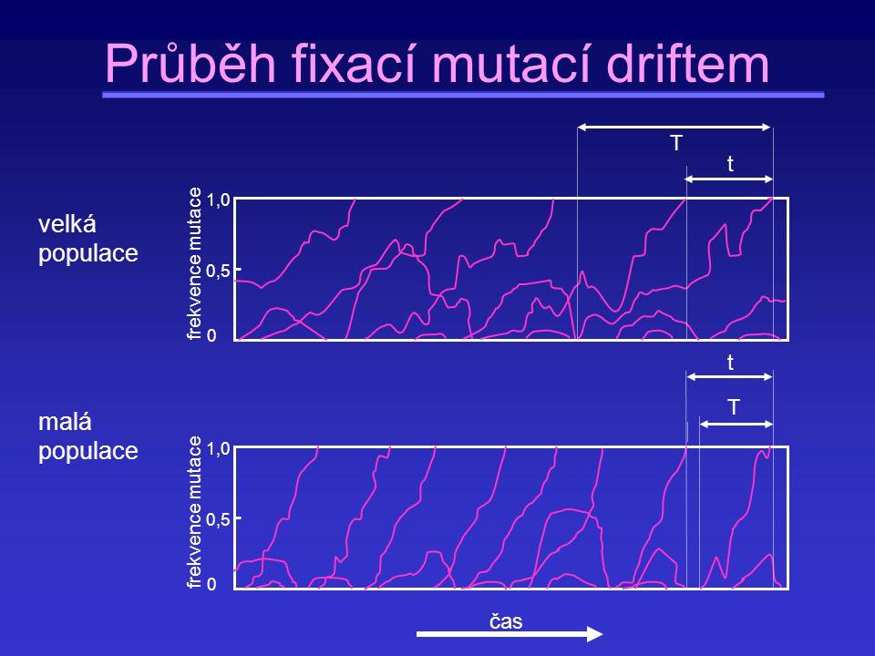 Neutralita substitučních mutací Testováno pomocí McDonald-Kreitmanova testu (2 x 2 kontingenční tabulka)