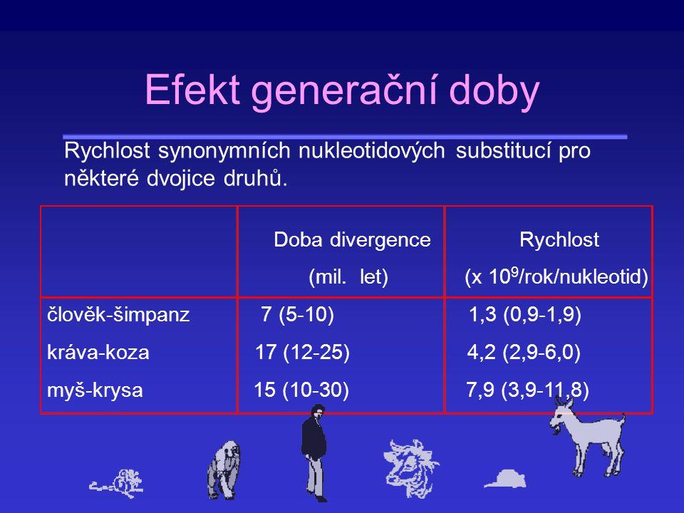 Rozdíly v mezi synonymními a nesynonymními mutacemi Synonymní – generační doba má vliv Nesynonymní (proteiny) – patrně nemá vliv 1.Teorie mírně škodlivých mutací (negativní korelace generační doby a velikosti populace).