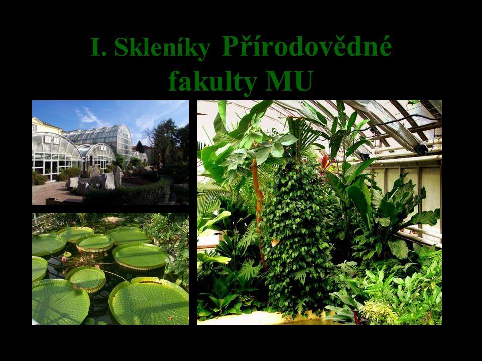 Masožravé rostliny Všechny masožravé rostliny jsou řazeny k tzv.