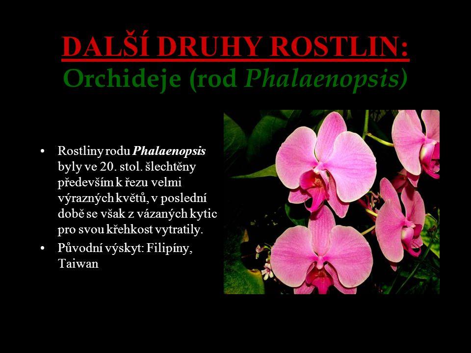 DALŠÍ DRUHY ROSTLIN: Orchideje (rod Phalaenopsis) Rostliny rodu Phalaenopsis byly ve 20. stol. šlechtěny především k řezu velmi výrazných květů, v pos
