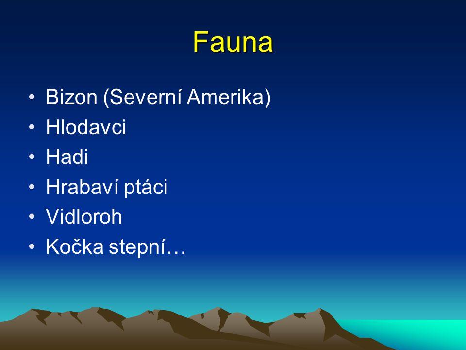 Fauna Bizon (Severní Amerika) Hlodavci Hadi Hrabaví ptáci Vidloroh Kočka stepní…