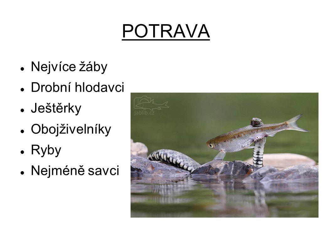 POTRAVA Nejvíce žáby Drobní hlodavci Ještěrky Obojživelníky Ryby Nejméně savci