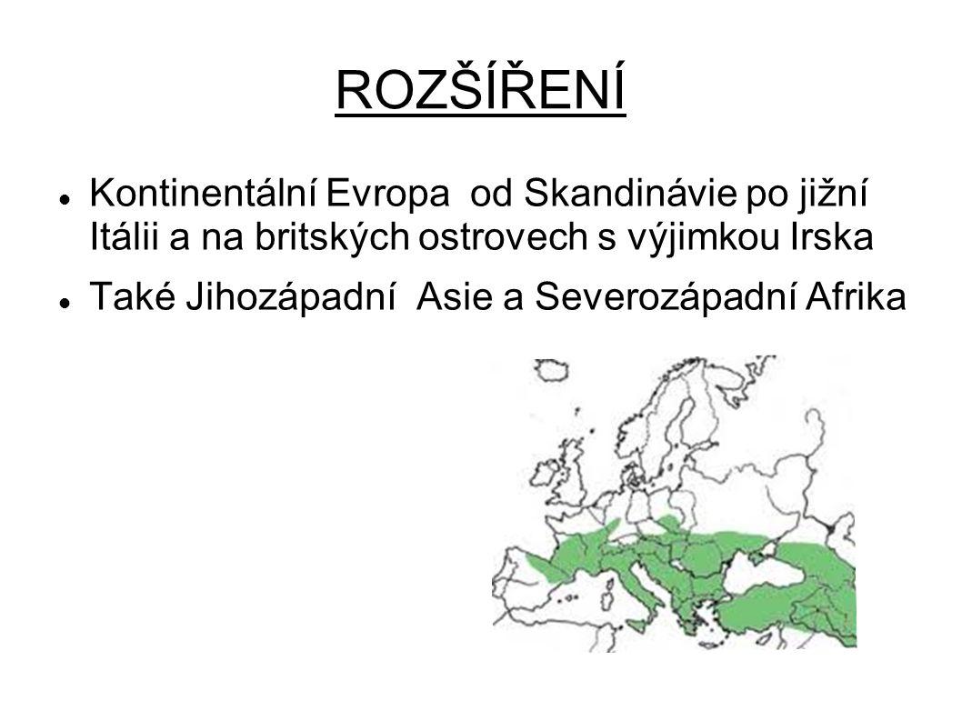 ROZŠÍŘENÍ Kontinentální Evropa od Skandinávie po jižní Itálii a na britských ostrovech s výjimkou Irska Také Jihozápadní Asie a Severozápadní Afrika