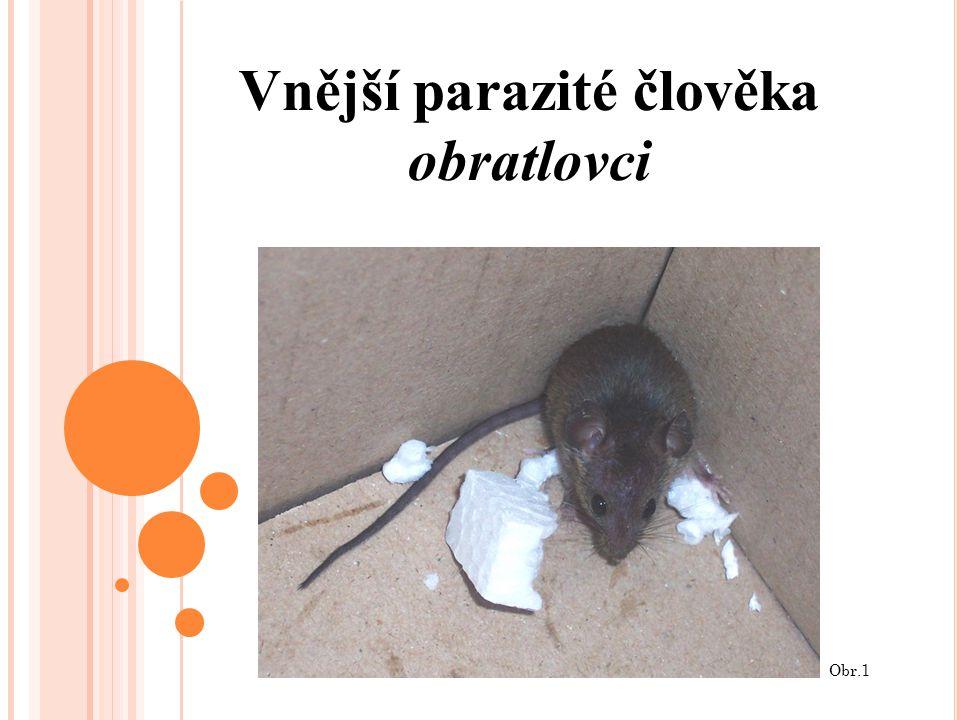 Vnější parazité člověka obratlovci Obr.1