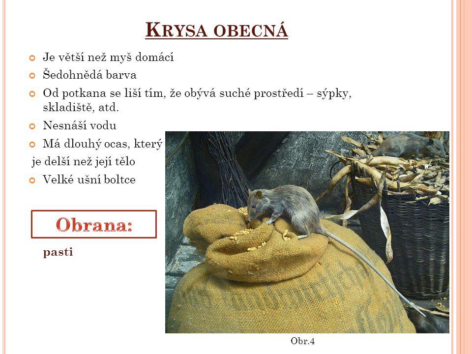 K RYSA OBECNÁ Je větší než myš domácí Šedohnědá barva Od potkana se liší tím, že obývá suché prostředí – sýpky, skladiště, atd.