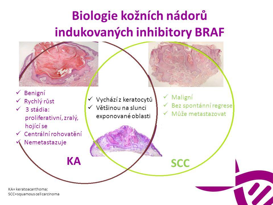 Biologie kožních nádorů indukovaných inhibitory BRAF Benigní Rychlý růst 3 stádia: proliferativní, zralý, hojící se Centrální rohovatění Nemetastazuje