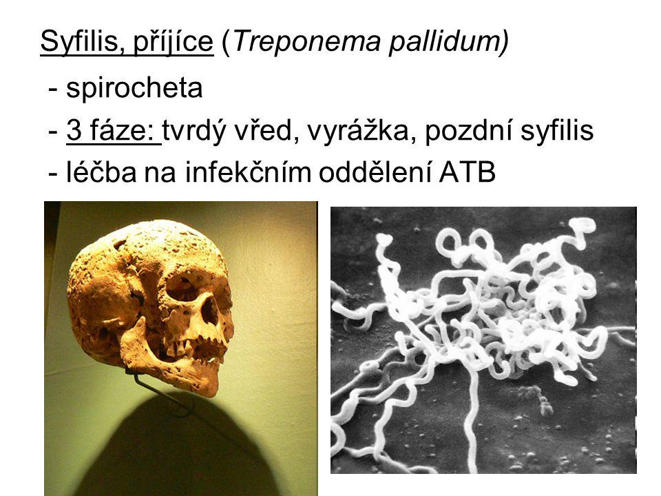 Syfilis, příjíce (Treponema pallidum) - spirocheta - 3 fáze: tvrdý vřed, vyrážka, pozdní syfilis - léčba na infekčním oddělení ATB