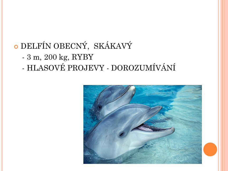 DELFÍN OBECNÝ, SKÁKAVÝ - 3 m, 200 kg, RYBY - HLASOVÉ PROJEVY - DOROZUMÍVÁNÍ