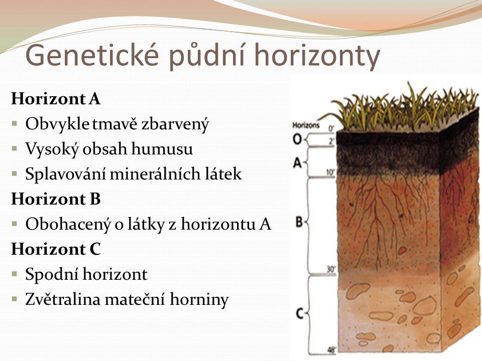 Půdní typy  Dělení podle půdních horizontů a barvy půdy Černozemě  Nejúrodnější typ půd vznikající v sušších oblastech (Polabí)  Obsahují velký podíl humusu Hnědozemě  Méně úrodné půdy  Ve vyšších nadmořských výškách a v listnatých lesích Červenozemě  Obsahují sloučeniny železa a hliníku Podzolové půdy  Neúrodné kyselé půdy v jehličnatých lesích
