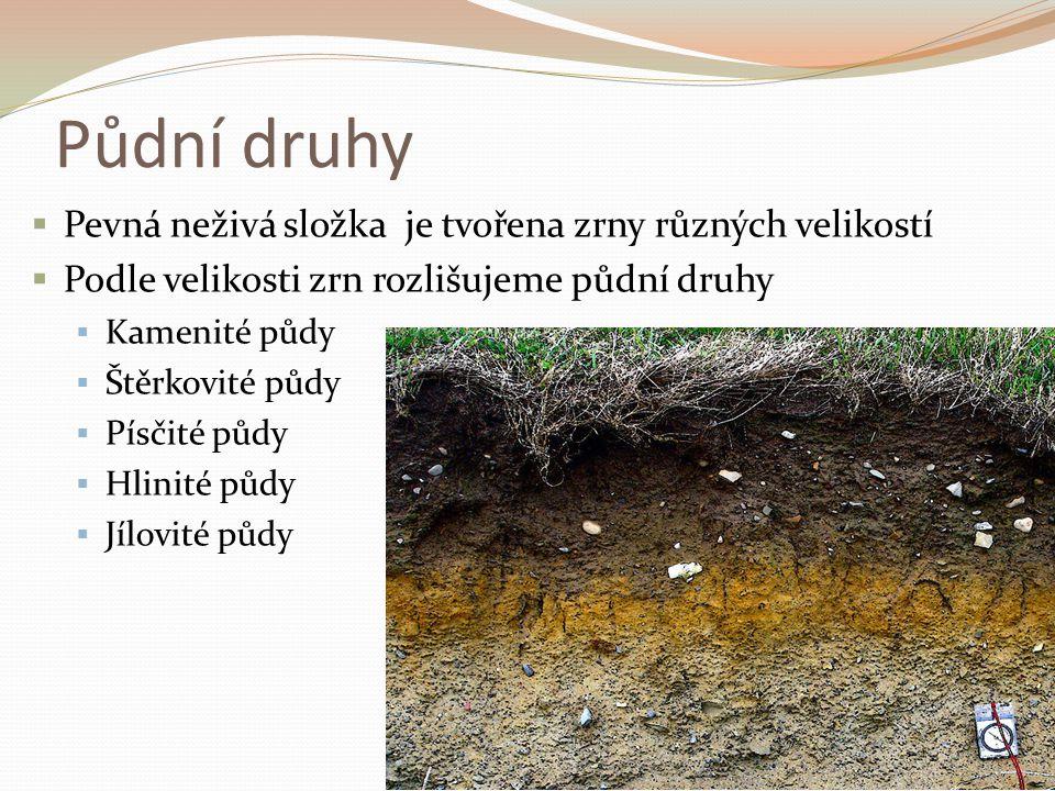 Půdní druhy  Pevná neživá složka je tvořena zrny různých velikostí  Podle velikosti zrn rozlišujeme půdní druhy  Kamenité půdy  Štěrkovité půdy 