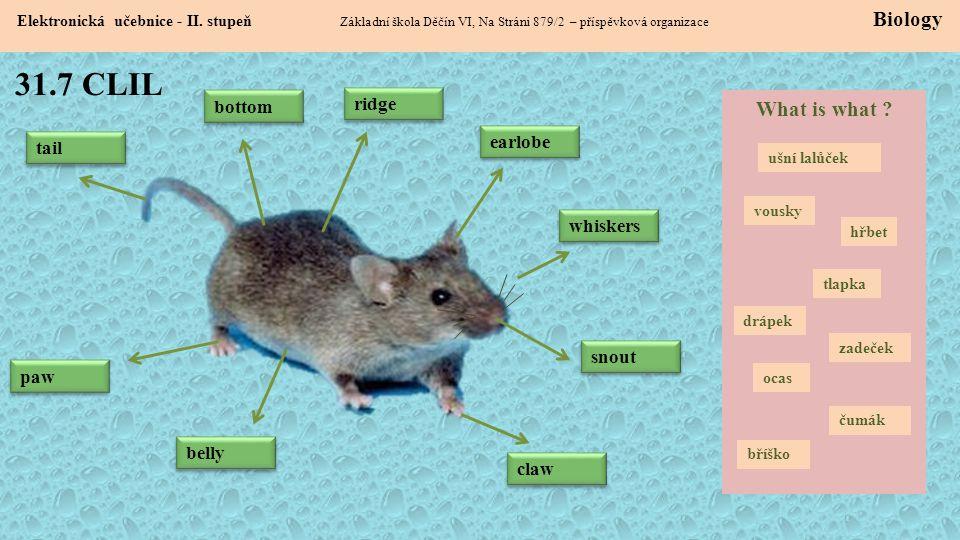 31.7 CLIL Elektronická učebnice - II. stupeň Základní škola Děčín VI, Na Stráni 879/2 – příspěvková organizace Biology earlobe snout whiskers claw paw