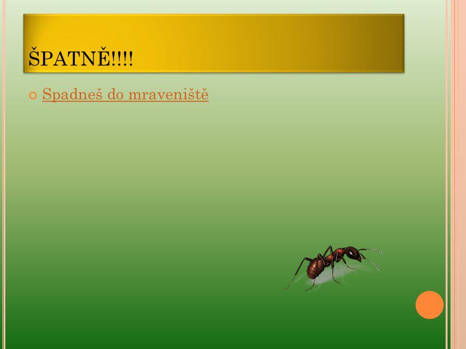 ŠPATNĚ!!!! Spadneš do mraveniště