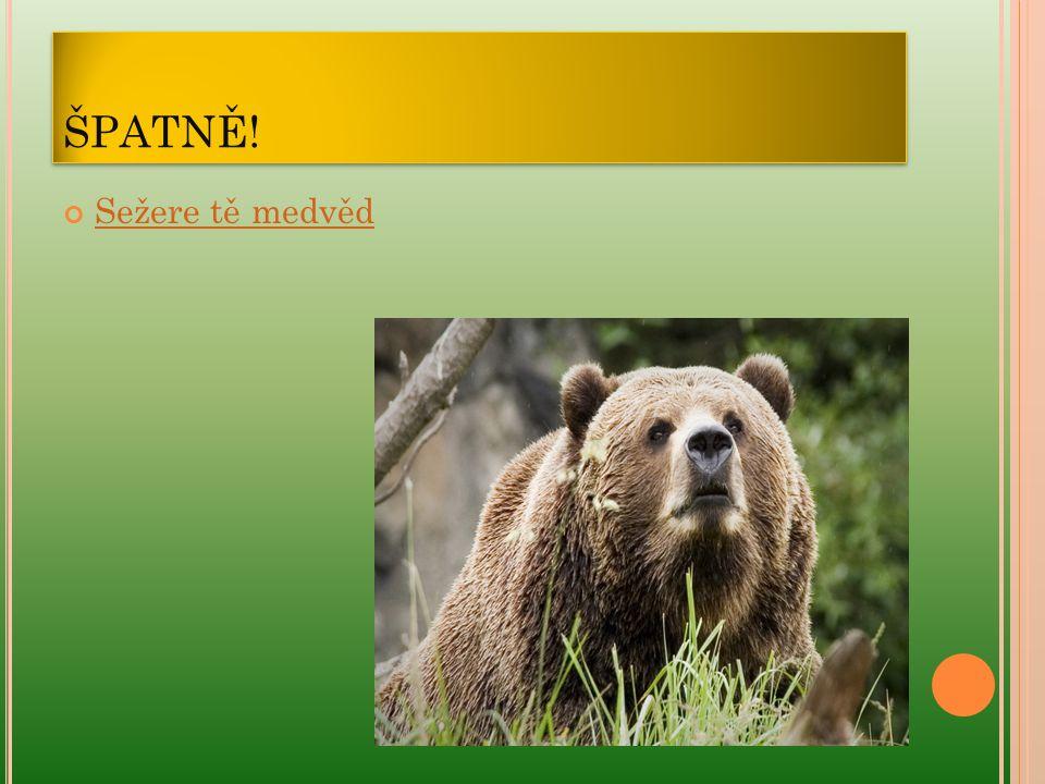 ŠPATNĚ! Sežere tě medvěd
