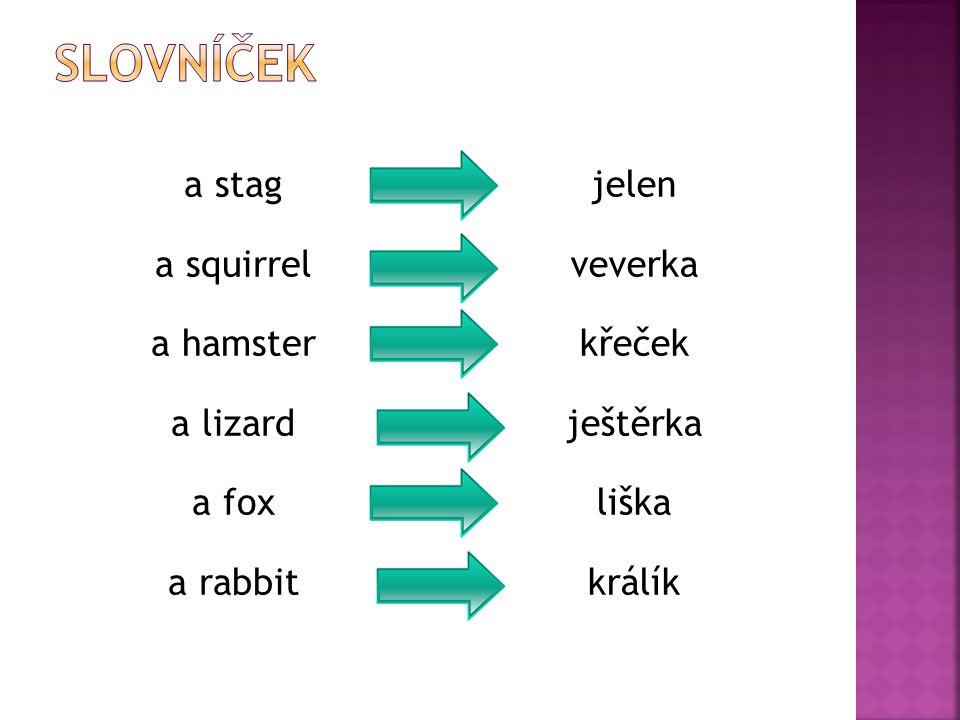 a stag a squirrel a hamster a lizard a fox a rabbit jelen veverka křeček ještěrka liška králík