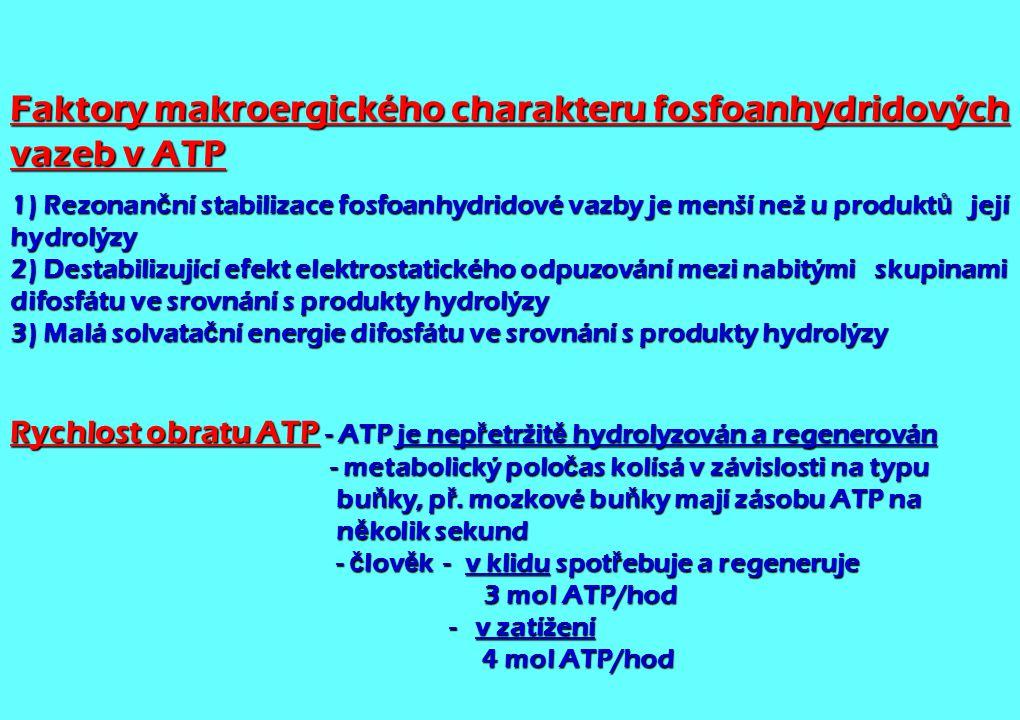 Faktory makroergického charakteru fosfoanhydridových vazeb v ATP 1) Rezonan č ní stabilizace fosfoanhydridové vazby je menší než u produkt ů její hydr