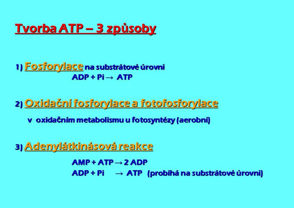 Tvorba ATP – 3 zp ů soby 1) Fosforylace na substrátové úrovni ADP + Pi → ATP 2) Oxida č ní fosforylace a fotofosforylace v oxida č ním metabolismu u f