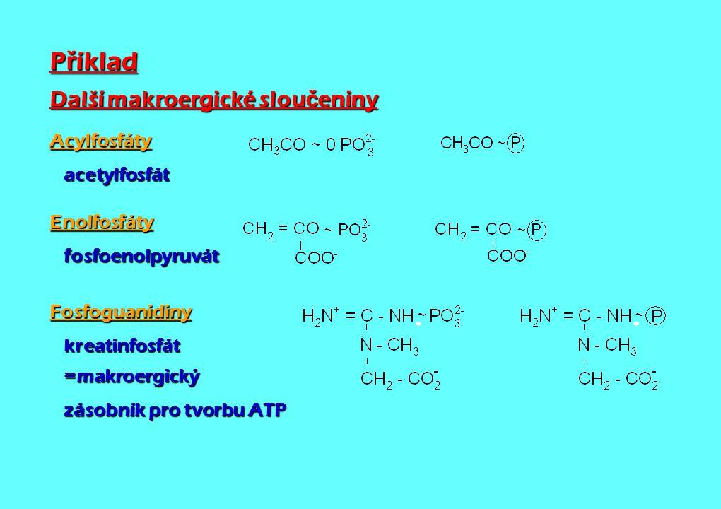 P ř íklad Další makroergické slou č eniny Acylfosfáty acetylfosfát acetylfosfátEnolfosfáty fosfoenolpyruvát fosfoenolpyruvátFosfoguanidiny kreatinfosf