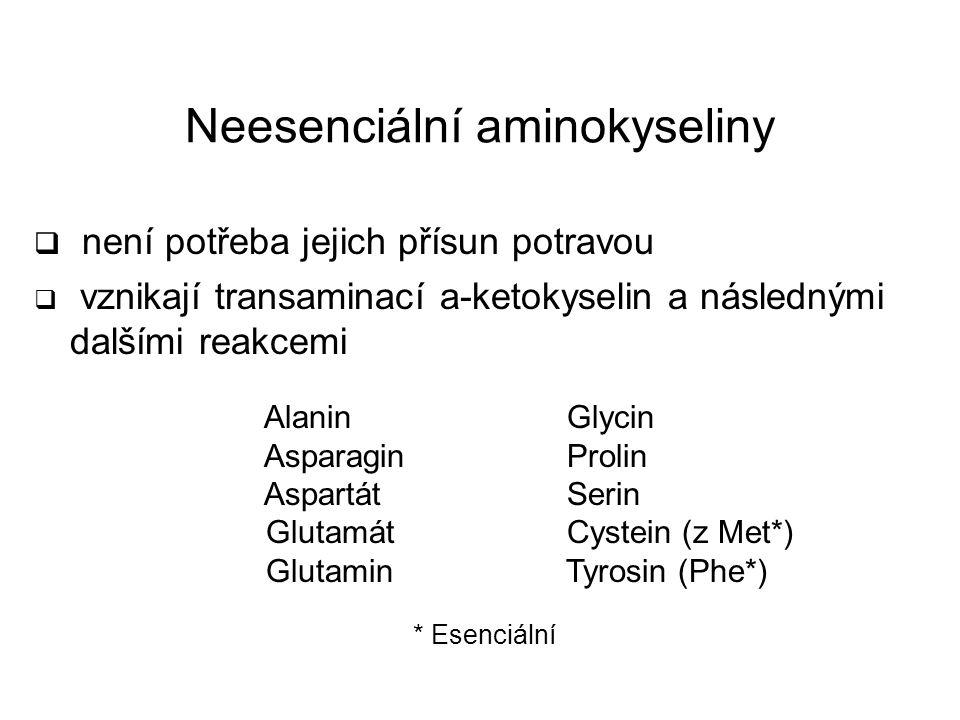 Neesenciální aminokyseliny  není potřeba jejich přísun potravou  vznikají transaminací a-ketokyselin a následnými dalšími reakcemi Alanin Asparagin