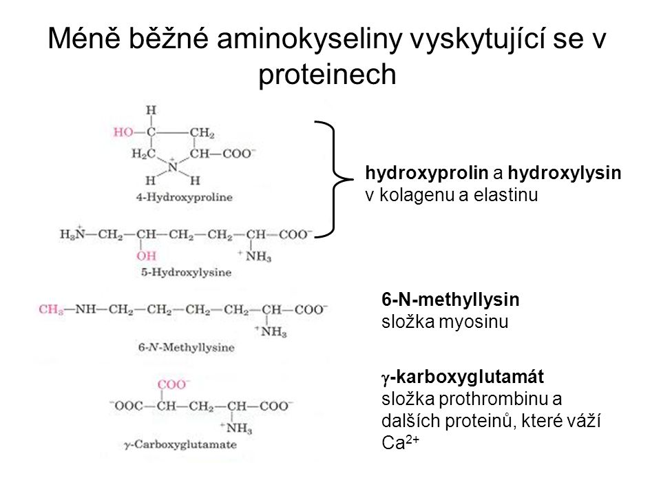 Méně běžné aminokyseliny vyskytující se v proteinech hydroxyprolin a hydroxylysin v kolagenu a elastinu 6-N-methyllysin složka myosinu  -karboxygluta