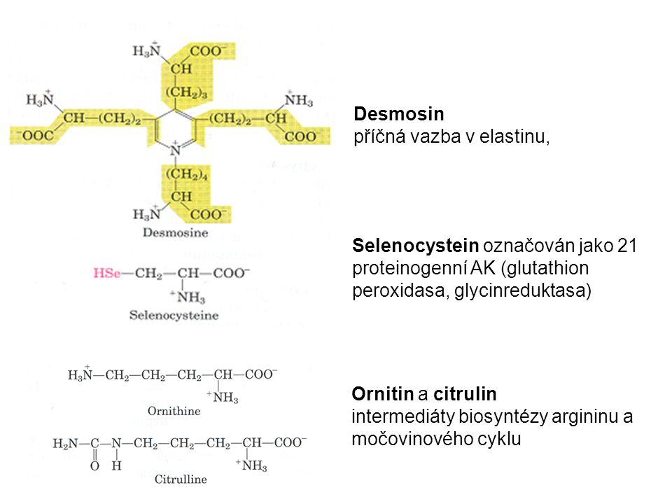 Desmosin příčná vazba v elastinu, Ornitin a citrulin intermediáty biosyntézy argininu a močovinového cyklu Selenocystein označován jako 21 proteinogen