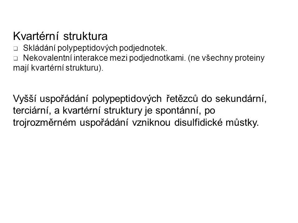 Kvartérní struktura  Skládání polypeptidových podjednotek.  Nekovalentní interakce mezi podjednotkami. (ne všechny proteiny mají kvartérní strukturu