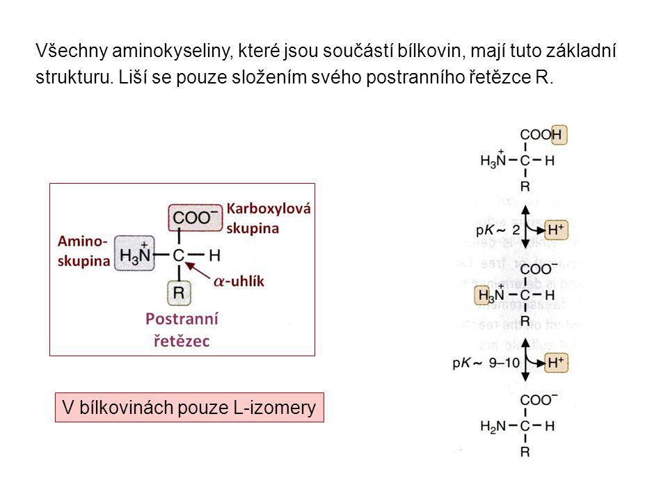 Všechny aminokyseliny, které jsou součástí bílkovin, mají tuto základní strukturu. Liší se pouze složením svého postranního řetězce R. V bílkovinách p