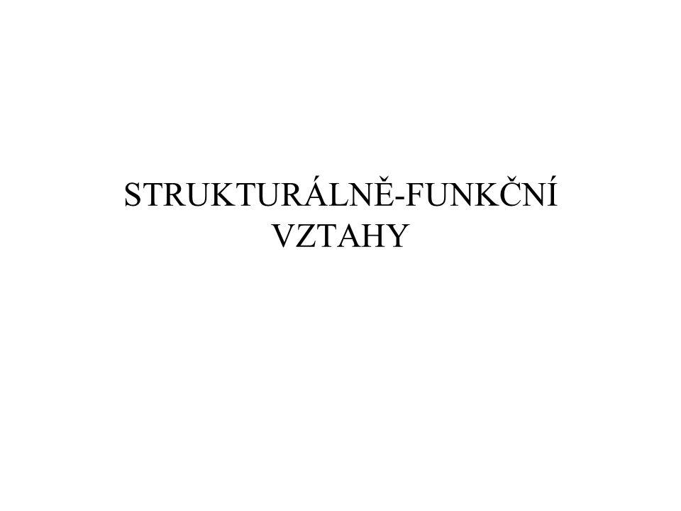 STRUKTURÁLNĚ-FUNKČNÍ VZTAHY