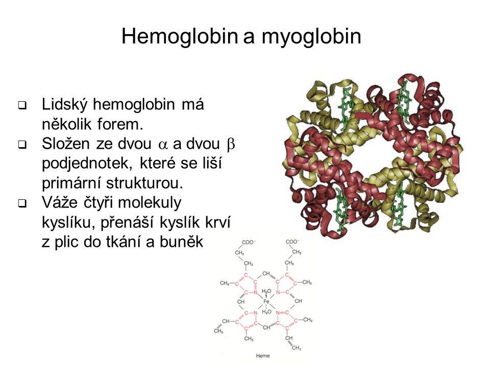Hemoglobin a myoglobin  Lidský hemoglobin má několik forem.  Složen ze dvou  a dvou  podjednotek, které se liší primární strukturou.  Váže čtyři